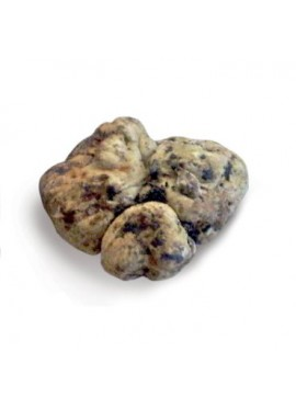 BIANCHETTO TRUFFLE OR WHITISH TRUFFLE